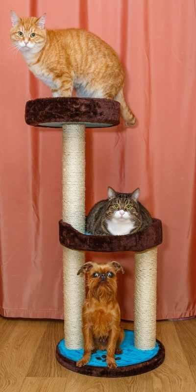 Adoptable Pets and Animal Control