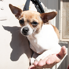 Adoptable pets in Ely, NV
